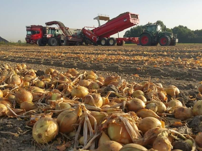 Field Loader 240 - left (far, onions)